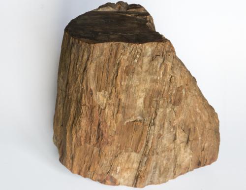 versteend hout te koop